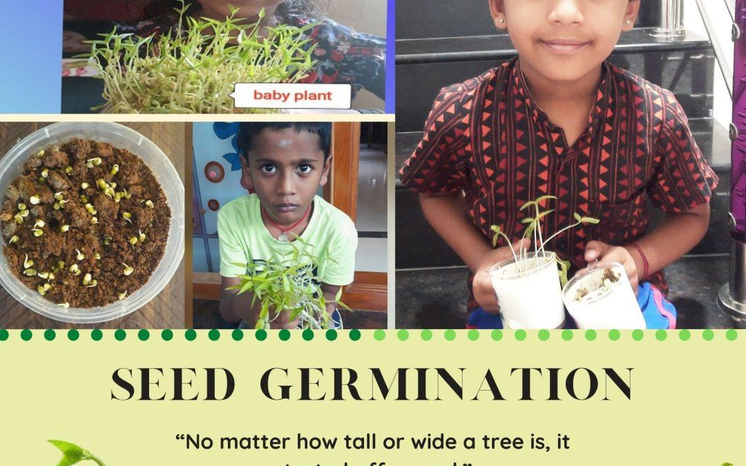 Germination – Grade 1 Science